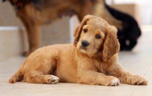 Как отучить собаку есть на улице опасные продукты?