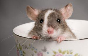 Клетка для крысок