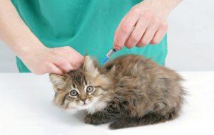 Вакцинация поможет защитить кошку от болезней?