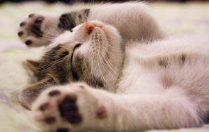 Сколько заболеваний кошка может передать человеку