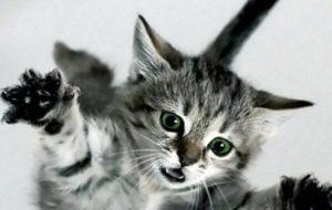 Как отучить котенка царапаться: практические советы
