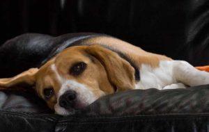 У собаки выпадает шерсть – что делать?
