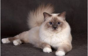 Кастрация котов, методы и последствия