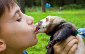 Домашние животные: лечат людей или переносят болезни?