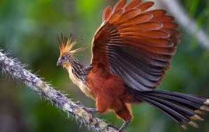 Лекарство для птиц: как лечить попугая и прочих пернатых