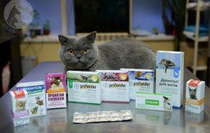 Обзор самых популярных средств от глистов у кошек