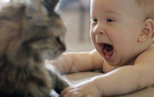 Действительно ли кошки лечат людей?