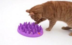 Интересные вещи для кошек