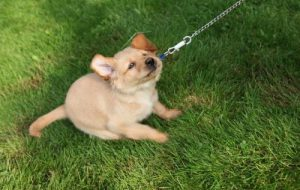 Какие породы собак самые упрямые?
