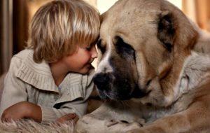 Как вымыть лапы собаке от реагентов?