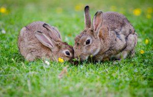 Как выбрать корм для кролика