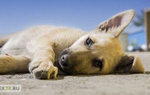 Домашние животные лечат лучше антидепрессантов