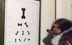 Тест Кэмпбелла — как определить характер у щенка