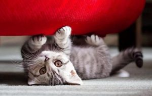 Как отучить кошку царапать обои и мебель?