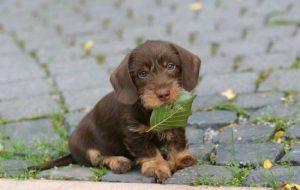 Как выбрать кличку для щенка и приучить его к ней