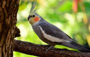 Перелом лапы у попугая: какая помощь необходима?