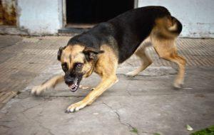 Собака атакует — что делать?