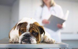 Токсоплазмоз, туляремия и еще 7 опасных заболеваний, которыми вас могут заразить домашние животные