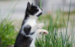Дрессировка кошек — советы от артистов цирка