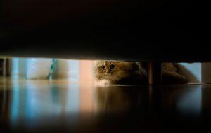 Ваше домашнее привидение
