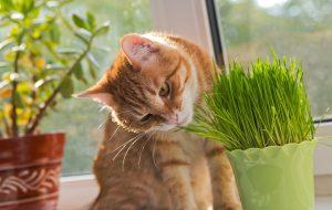 Как действует валерьянка на котов