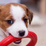 Душ для собак: новый тренд в современных домах и квартирах