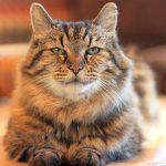 Как коты показывают свою любовь