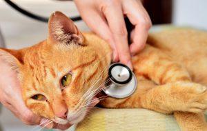 Чумка у кошки (инфекционный энтерит)