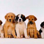 Осенняя депрессия у собаки