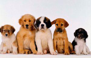 У собаки перхоть: что делать