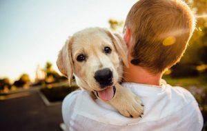 Домашние животные способны лечить наши физические и душевные травмы: научные доказательства