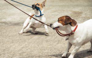 Четыре наиболее распространенные поведенческие проблемы у собак