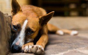 Почему собаку нельзя оставлять в машине