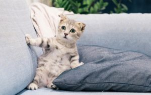 Кошкин дом: выбираем домик для питомца
