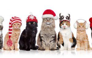 «Как завернуть подарок, если у тебя есть кошка»