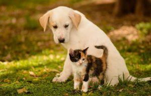 Взрослая ответственность за маленьких друзей