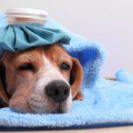 Язык животных: как питомец пытается сказать, что он болен