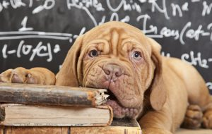 Как отучить собаку грызть вещи и мебель