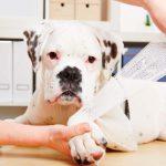 Это должен уметь любой хозяин: правила экстренной помощи кошкам и собакам