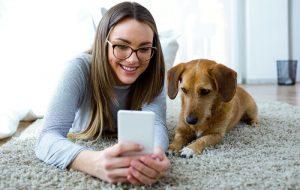 Почему собака скулит, грызет мебель и боится петард?