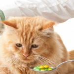 Айлурофилия и коты