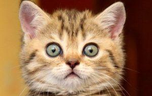 О чем могут говорить расширенные зрачки у кошки?