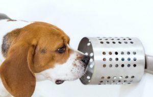 Собаки могут выявить рак легких в 97% случаев