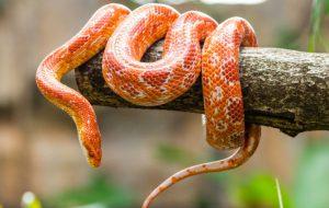 Что нам известно о змеях?