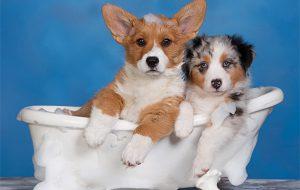Водные процедуры для собак: особенности проведения и частота мытья