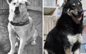 Хатико и еще 5 домашних животных, которые хранили верность хозяину после его смерти