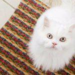 Как удалить следы кошачей мести из квартиры