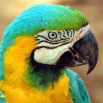 Птичка невеличка по имени Воробей