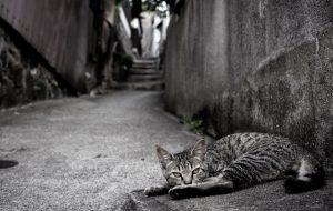 Кальцевироз у кошек и котов: симптомы и лечение