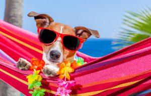 Животное в жару: как уберечь питомца от теплового удара?